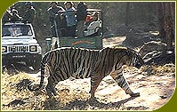 Jeep Safari, Ranthambore Wildlife Sanctuary